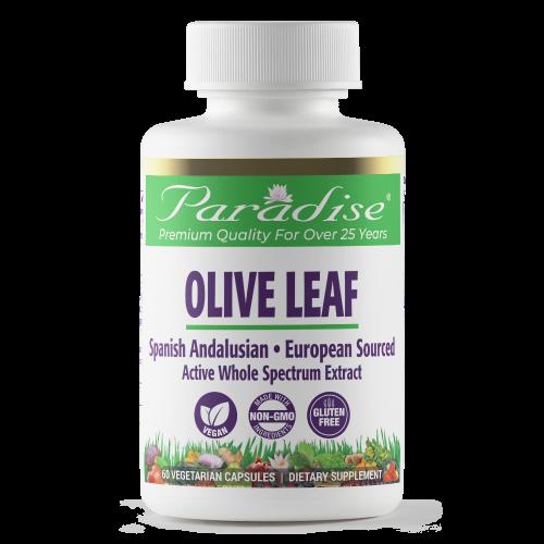 225cc Olive Leaf p front